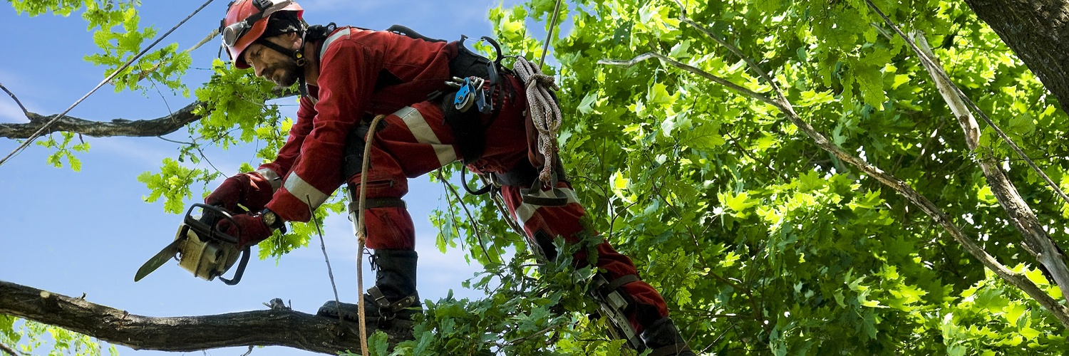 Tree Service Insurance Massachusetts