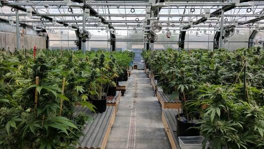 Cannabis Commercial Property Insurance Massachusetts